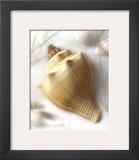 Sand and Shell VI
