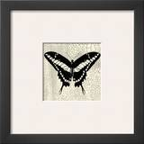 Classical Butterfly IV