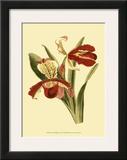 Orchid Splendor I