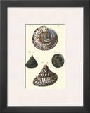 Sea Shells II