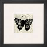 Classical Butterfly II