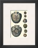 Sea Shells V
