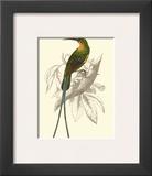 Jardine Hummingbird V