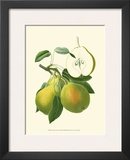 Antique Green Pear
