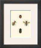 Insecte I