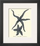 Indigo Starfish II