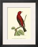 Crimson Birds III