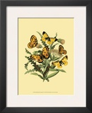 Small Butterfly Gathering IV