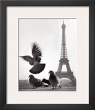 Eiffel Tower with Pigeons  Paris