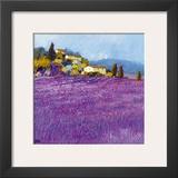 Wild Lavender  Provence