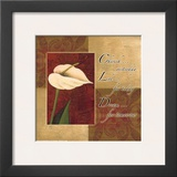 Calla Lily  Cherish Live Dream