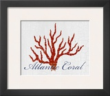 Atlantic Coral
