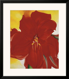 Red Amaryllis  c1937