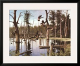 Summer Refuge  Wood Ducks