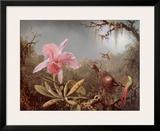 Cattleya Orchid and Three Brazilian Humm
