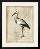 Antiquarian Birds II