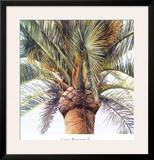 Roma Palm