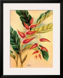 Heliconia  Hawaiian Tropical Flower c1940s