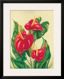 Anthurium II  Red Hawaiian Tropical Flowers
