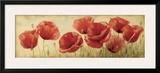 Poppies Grace II