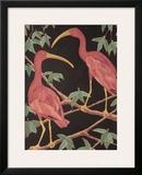Scarlet Ibis II