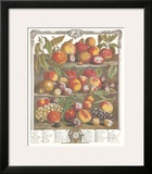 Twelve Months of Fruits  1732  August