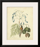 Catesby Bird & Botanical II