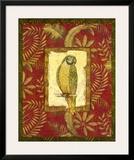 Exotica Parrot