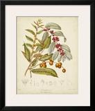 Twining Botanicals VIII