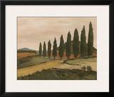 Shady Tuscan Road