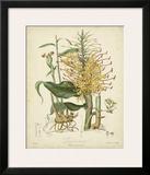 Twining Botanicals VII