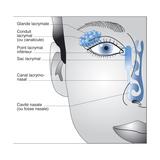 Lacrimal Apparatus  Drawing