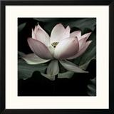 The Lotus I