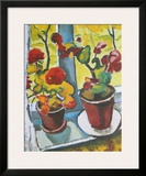 Flowers at the Window  Begonias