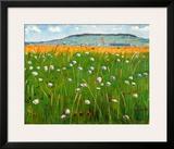 Meadow  c1902