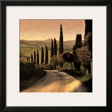 Country Lane  Tuscany