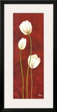 Danza di Tulipani