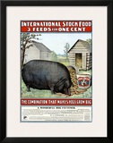 International Hog Swine Feed