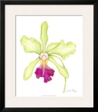 Orchid Beauty III