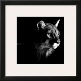 Wildlife Scratchboards VII