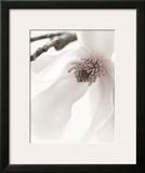 Magnolia Blush I
