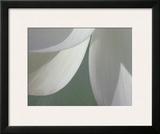 Lotus Detail I