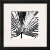 Black and White Palms III