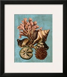 Shell and Coral Collection on Aqua I