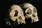 Skulls of Tuang Child And a Chimpanzee