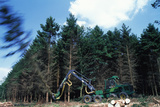Commercial Forestry