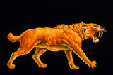 Artwork of a Sabre-toothed Cat (Smilodon Sp)