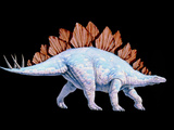 Artwork of Stegosaurus Dinosaur  Stegosaurus Sp