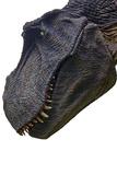 Tyrannasaurus Rex Model
