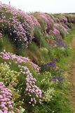 Wildflowers Along a Coastal Bank
